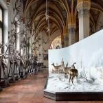 A Magyar Mezőgazdasági Múzeum gótikus termében látható vadászati állandó kiállítás trófeái és diorámája, 2015.  Fotó: Villányi Csaba